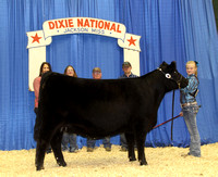 2015 Dixie National Junior Angus Show