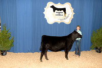Calf Division 1 - Classes 1-3