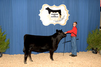Calf Division 2 - Classes 4-7