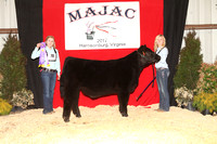Crossbred Steer Backdrop