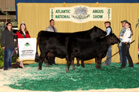 Cow Calf Backdrops