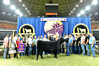 Owned Grand Champion Heifer, Division 10 Jr Heifer 4, Class 38, entry 1411, exhibited by Kathryn Coleman APP_3509