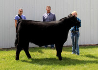 Reserve Champion Steer - Griffith