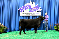 Division 6 Senior Heifer (Classes 24-28)