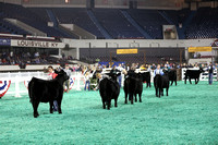 2015 NAILE | Junior Angus Show