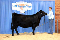 2016 Oklahoma Junior Cattlemen's Preview