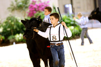 Junior B Showmanship