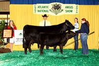 Owned Heifer Backdrops