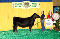 Bred-and-Owned Heifer Backdrops