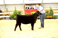 Bred and Owned Heifer Candids