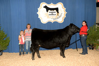 Late Junior Heifer 17-21