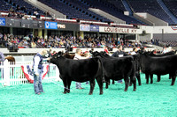 NAILE 2013 | Junior Heifer Show
