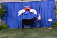 2014 NJAS | B&O Heifers Backdrops