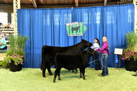 Owned Cow Calf Backdrops