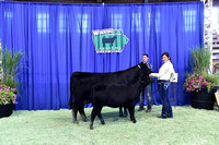 Bred Owned Cow Calf Backdrops