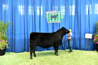 Steer Show Backdrops