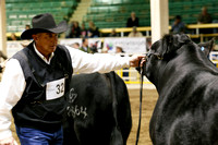 2014 National Western Stock Show
