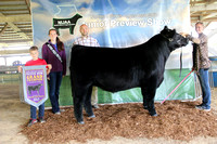 North Illinois Angus Assn. Junior Preview