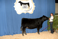 Early Junior Heifer 22-26